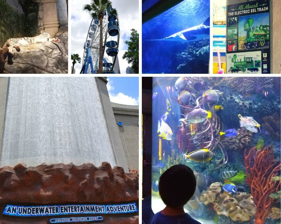 Collage of things to do at the Houston Downtown Aquarium.